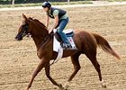 Kentucky Bear, sixth last out in the Preakness (gr. I), looks to rebound in the $600,000 Colonial Turf Cup (gr. IIIT).
