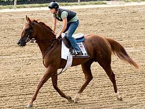 Kentucky Bear on track at Pimlico May 8.