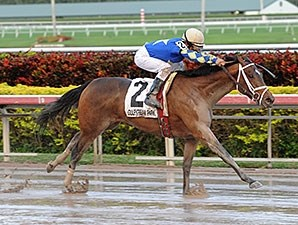 Candy Kitty wins the 2013 Wait a While Stakes.