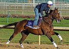 "Jeranimo at Churchill Downs on Nov 1.<br><a target=""blank"" href=""http://www.bloodhorse.com/horse-racing/photo-store?ref=http%3A%2F%2Fpictopia.com%2Fperl%2Fgal%3Fprovider_id%3D368%26ptp_photo_id%3D9725465%26ref%3Dstory"">Order This Photo</a>"