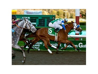 Hudson Landing won the 2012 All American Stakes by a nose over Control Seeker.