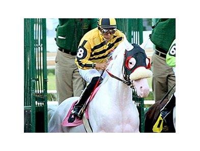 Mahubahs Corner White Thoroughbreds Bloodhorse