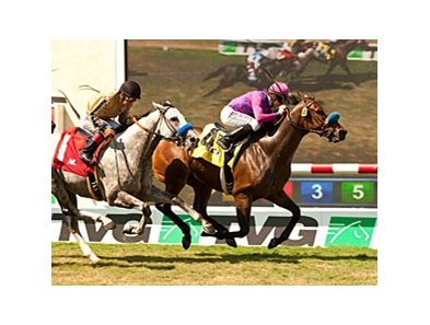 Obviously won the Del Mar Mile in 2012 and 2013 (shown).