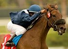 "Wasted Tears won the John C. Mabee Stakes in 2010.<br><a target=""blank"" href=""http://www.bloodhorse.com/horse-racing/photo-store?ref=http%3A%2F%2Fpictopia.com%2Fperl%2Fgal%3Fprovider_id%3D368%26ptp_photo_id%3D9145830%26ref%3Dstory"">Order This Photo</a>"