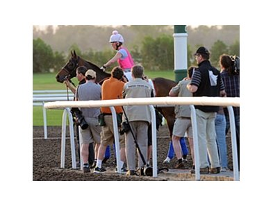 Game On Dude and Chantal Sutherland draw a crowd Friday morning at Meydan.
