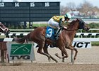 "My Wandy's Girl won the Pentelis Stakes on Nov. 15.<br><a target=""blank"" href=""http://photos.bloodhorse.com/AtTheRaces-1/at-the-races-2012/22274956_jFd5jM#!i=2229687487&k=PmHtqpR"">Order This Photo</a>"
