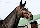 Visit With Zenyatta to Benefit CKRH