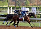 "Indianapolis on the track at Santa Anita on Oct. 27. <br><a target=""blank"" href=""http://photos.bloodhorse.com/BreedersCup/2014-Breeders-Cup/Works/i-zcwkGMb"">Order This Photo</a>"