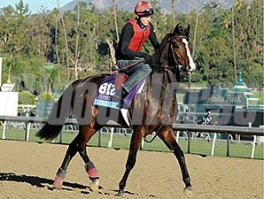 Giovanni Boldini - 2013 Breeders' Cup, October 31, 2013.