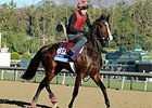 "Giovanni Boldini<br><a target=""blank"" href=""http://photos.bloodhorse.com/BreedersCup/2013-Breeders-Cup/Breeders-Cup/32986083_QMHXWK#!i=2874006774&k=FFHvn3b"">Order This Photo</a>"