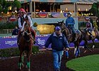 "California Chrome schooled in the paddock on Oct. 28. <br><a target=""blank"" href=""http://photos.bloodhorse.com/BreedersCup/2014-Breeders-Cup/Works/i-TsBqgZH"">Order This Photo</a>"
