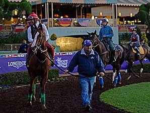 California Chrome schools in the paddock at Santa Anita on October 28, 2014