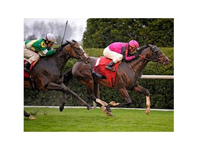 "Mr. Sidney won the Maker's Mark Mile during the Keeneland 2009 Spring Meet. <br><a target=""blank"" href=""http://www.bloodhorse.com/horse-racing/photo-store?ref=http%3A%2F%2Fgallery.pictopia.com%2Fbloodhorse%2Fgallery%2FS731627%2Fphoto%2F7997556%2F%3Fo%3D0"">Order This Photo</a>"