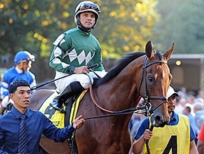 Zivo before finishing second in the 2014 Jockey Club Gold Cup.