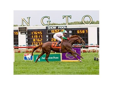 Cape Blanco in the Arlington Million