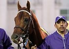 "2011 Breeders' Cup Classic winner Drosselmeyer<br><a target=""blank"" href=""http://www.bloodhorse.com/horse-racing/photo-store?ref=http%3A%2F%2Fpictopia.com%2Fperl%2Fgal%3Fprovider_id%3D368%26ptp_photo_id%3D9729978%26ref%3Dstory"">Order This Photo</a>"