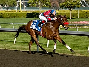 Look Quickly wins the 2013 Golden Gate Debutante Stakes.