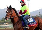 Palace Carries New York Hopes Into BC Sprint