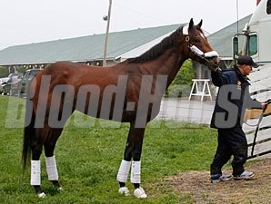 Astrology leaves for Pimlico, May 18, 2011.