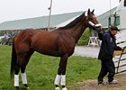 Astrology: High Hopes for Preakness