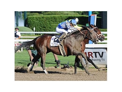 "Whitney winner Blame scheduled to make next start in the Jockey Club Gold Cup.<br><a target=""blank"" href=""http://www.bloodhorse.com/horse-racing/photo-store?ref=http%3A%2F%2Fpictopia.com%2Fperl%2Fgal%3Fprovider_id%3D368%26ptp_photo_id%3D9133155%26ref%3Dstory"">Order This Photo</a>"