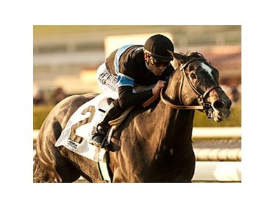Mizdirection is undefeated in four starts over the hillside turf course at Santa Anita Park.