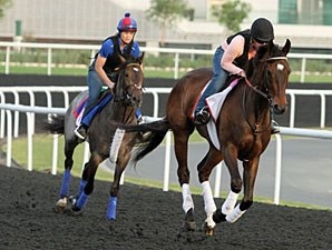 Royal Delta and Luck Chappy working at Meydan.