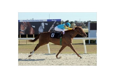 Ocala Breeders' Sale Championship Stakes winner Halo Najib heads the Lane's End Stakes at Turfway.