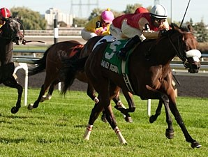 Dance Again wins the 2013 Carotene Stakes.