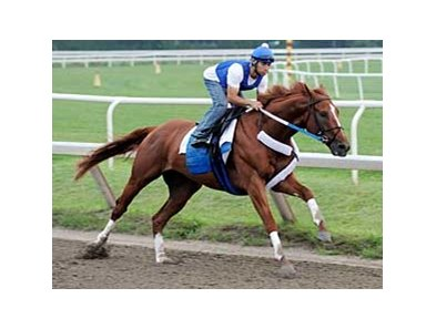 "Curlin breezes five furlongs over the Saratoga track on morning of July 28. <br><a target=""blank"" href=""http://www.bloodhorse.com/horse-racing/photo-store?ref=http%3A%2F%2Fpictopia.com%2Fperl%2Fgal%3Fprovider_id%3D368%26ptp_photo_id%3D5295784%0D%0A%26ref%3Dstory"">Order This Photo</a>"