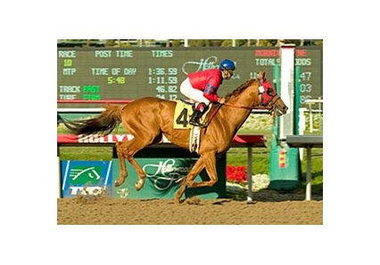 "The Brazilian-bred Molengao returns from a six-month layoff in the San Pasqual Handicap (gr. II) at Santa Anita Jan. 5.<br><a target=""blank"" href=""http://www.bloodhorse.com/horse-racing/photo-store?ref=http%3A%2F%2Fpictopia.com%2Fperl%2Fgal%3Fprovider_id%3D368%26ptp_photo_id%3D3190383%26ref%3Dstory"">Order This Photo</a>"
