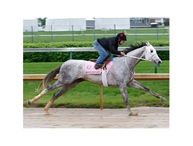 Joyful Victory works at Churchill Downs.