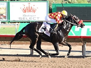 Tribal Gal wins the 2013 Princess of Palms Stakes.