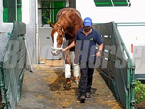 Shackleford arrives at Belmont Park.