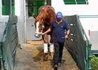 Shackleford arrives at Belmont.
