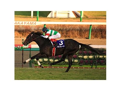 Alfredo wins the Asahi Hai Futurity Stakes.