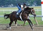 Uncle Mo worked five furlongs in a bullet 1:00 1/5 Aug. 9 at Saratoga.