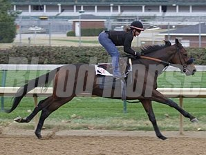 Sweet August Moon works at Churchill Downs.