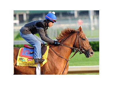 "Animal Kingdom<br><a target=""blank"" href=""http://www.bloodhorse.com/horse-racing/photo-store?ref=http%3A%2F%2Fpictopia.com%2Fperl%2Fgal%3Fprovider_id%3D368%26ptp_photo_id%3D9514347%26ref%3Dstory"">Order This Photo</a>"