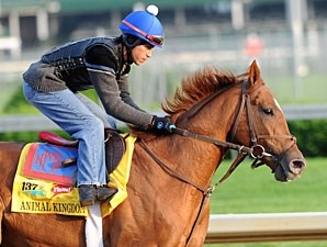 Animal Kingdom works at Churchill Downs 5/4/2011.