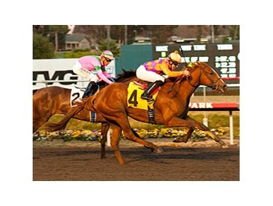 Killer Graces defeated Charm the Maker in the Hollywood Starlet on December 10.