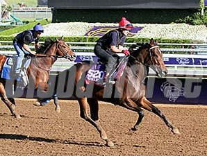 Wind Fire - Breeders' Cup 2014.