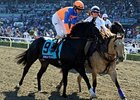 Noble Tune in the 2012 Breeders' Cup.