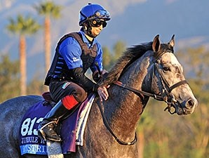Outstrip - 2013 Breeders' Cup, October 30, 2013.