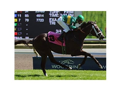 So Elite won the one-mile Charlie Barley Stakes on the Woodbine grass in 2010.
