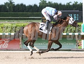Hello Prince wins the 2011 Birdonthewire.