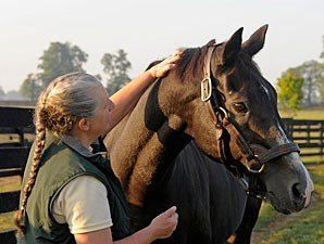 Wild Again with Three Chimneys stallion manager Sandy Hatfield in September 2008.