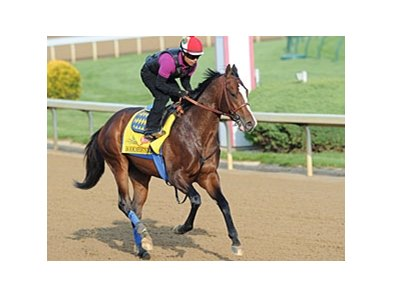"Bodemeister<br><a target=""blank"" href=""http://photos.bloodhorse.com/TripleCrown/2012-Triple-Crown/Works/22611108_LR3wcn#!i=1810654129&k=pf2S7RD"">Order This Photo</a>"