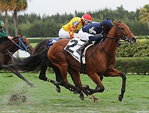 Lubash wins the 2014 Tropical Turf Handicap.