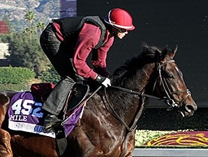 Cristoforo Colombo works at Santa Anita for Breeders' Cup 2013